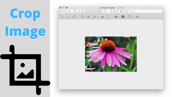 Crop Image On Mac Preview
