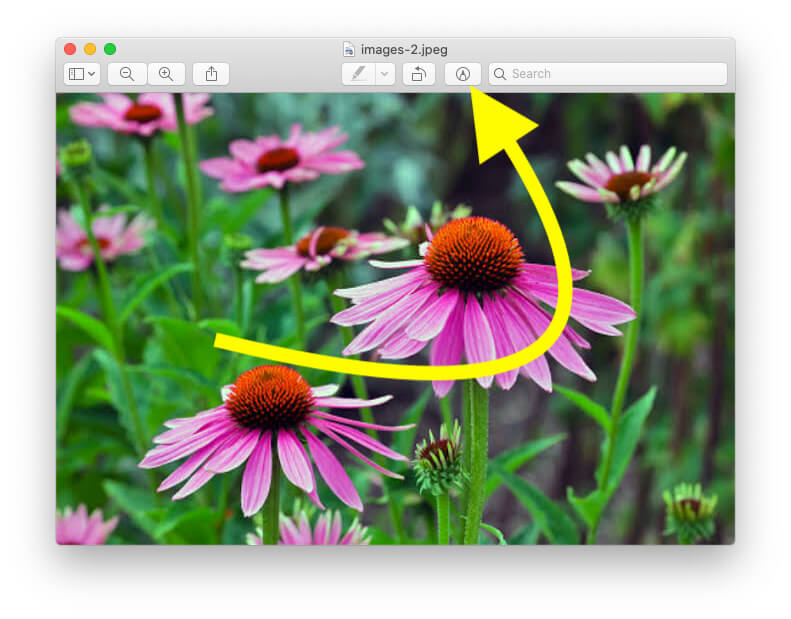Markup tool for Edit preview on Mac MacBook