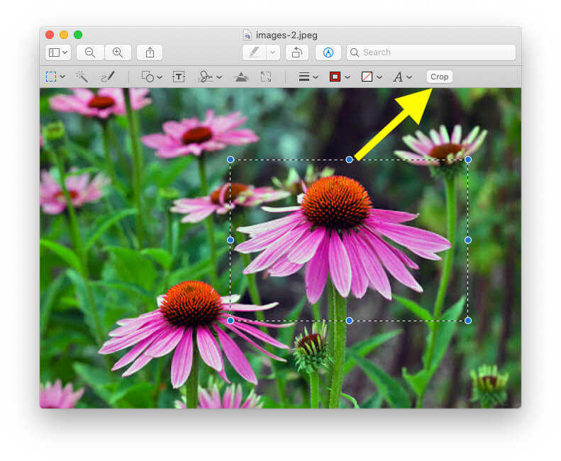 Select the Image with Cursor on Preview Mac