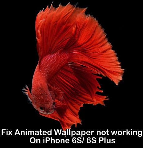 Animated Wallpaper not working on iPhone 6S, iOS 9