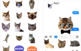 Best iMessage Cat Sticker Apps for iPhone