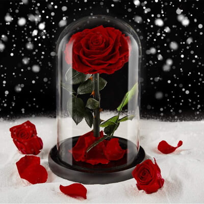 Romantic Rose Gift